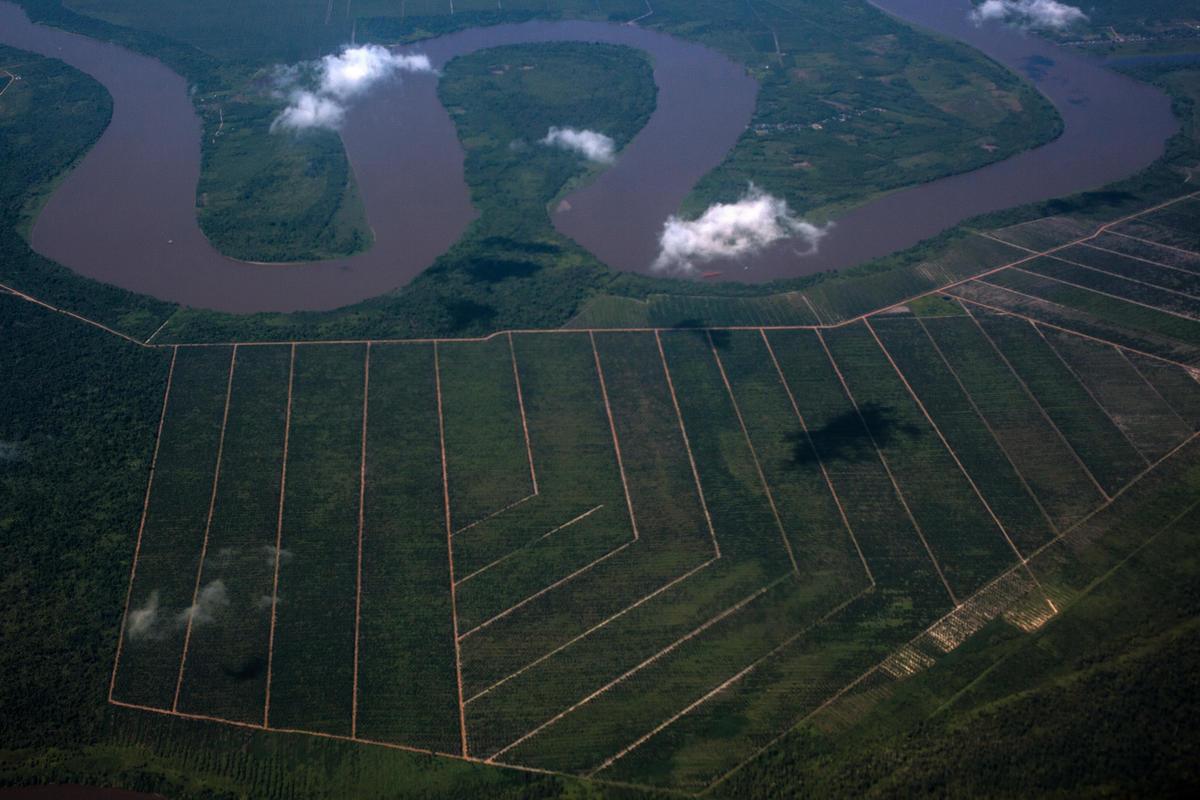 Palm Oil Concession in Kubu Raya, West Kalimantan. © Afriadi Hikmal / Greenpeace