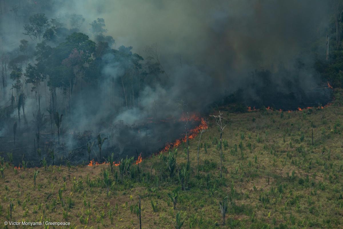 Forest Fires in Candeiras do Jamari, Amazon (2019)