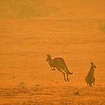 Feux de brousse en Australie : ce que vous pouvez faire