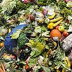 How to stop wasting food in 2020: a comprehensive guide