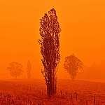 Australian bushfires: what you can do