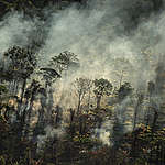 Greenpeace captures images of illegal fires raging in the Amazon