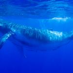 Tres motivos para seguir adelante por las ballenas