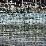 Greenpeace denuncia graves consecuencias de masivo escape de salmones