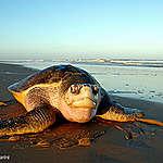 Informe de la ONU sobre biodiversidad: un millón de especies amenazadas de extinción