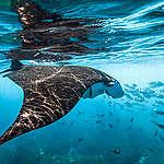 ¿Y si tratamos a nuestros océanos como si importaran?