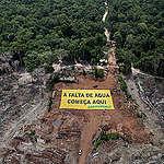 Más de 20 años de trabajo y logros de Greenpeace para defender el Amazonas