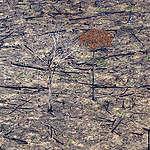 """Greenpeace y esperado nuevo informe mundial sobre cambio climático: """"Bosques, ganadería y formas de alimentarse son claves para enfrentar el cambio climático"""""""