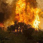 """Greenpeace y desoladora proyección de incendios forestales: """"Hay que prepararse para una de las peores temporadas de la historia"""""""
