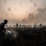 Balance 2019: Las imágenes medioambientales de Chile y el mundo.