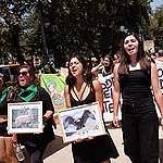 """Greenpeace y marchas climáticas en Santiago y Madrid:  """"La calle y el mundo político, en materia climática, hace rato hablan idiomas distintos""""."""