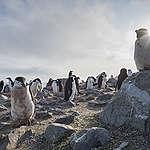 """Equipo de Greenpeace es testigo de temperatura récord en la Antártida: """"Nunca hizo tanto calor en el continente blanco""""."""