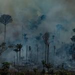 """Greenpeace sobre el informe de la 5th Global Biodiversity Outlook: """"Chile es un claro ejemplo de las amenazas a la biodiversidad a manos de las industrias extractivas y contaminantes""""."""