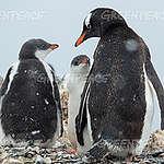 Cuenta regresiva para la protección de la Antártida