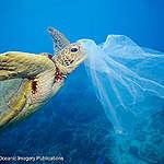 El plástico llega a las mayores profundidades del mar