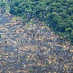 Demoledor informe internacional: Colombia arrasa con sus bosques