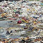 """""""La contaminación plástica pone en riesgo a los manglares"""""""