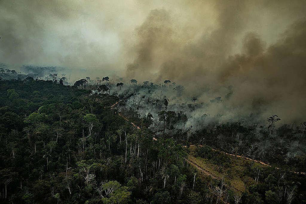 Resultado de imagen para amazonas