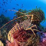 Las redes de pesca fantasma: una trampa mortal para la vida marina