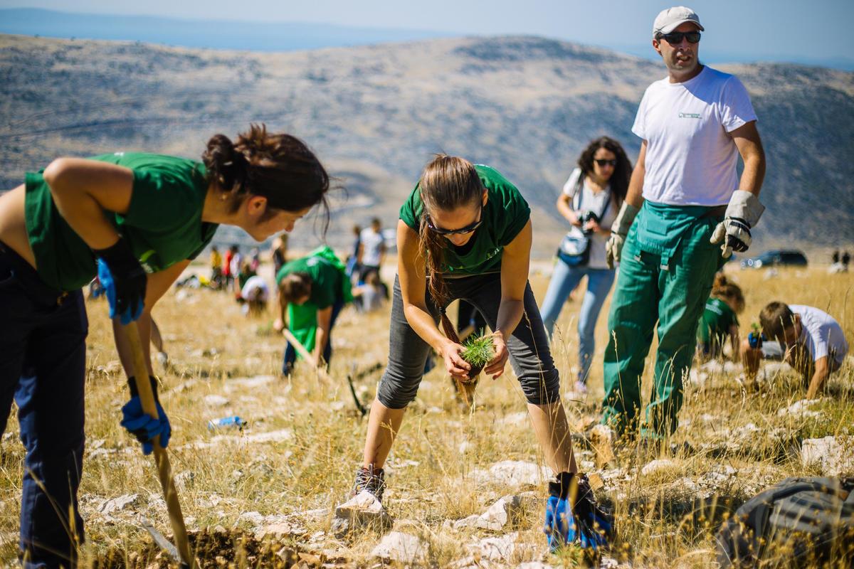 Reforestation Activity in Croatia. © Nevio  Smajic / Greenpeace