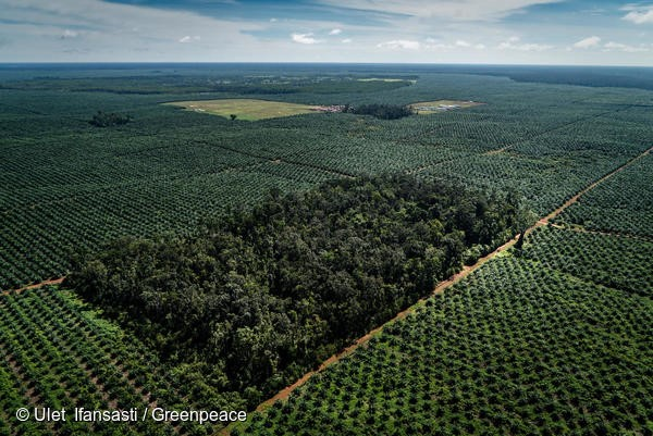 Documentation of landcover and oil palm plantation development in PT Agriprima Cipta Persada (PT ACP) oil palm concession, part of the GAMA/Ganda group.