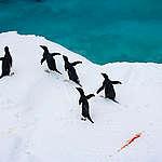 Státy zklamaly a nedokázaly se shodnout na ochraně oceánu u Antarktidy. Ještě ale není po všem