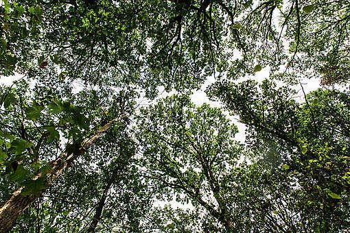 Hambašský les