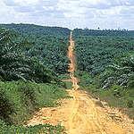 Palmová plantáž
