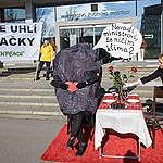 Uhlí pozvalo ministra životního prostředí na romantický oběd. Ministr nedorazil.