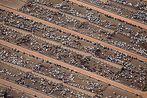 Dobytčí farma v Amazonii; vyfoceno během dokumentace požárů, které někdo založil kvůli odlesnění pro farmaření a chov dobytka.