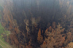 Siberian Forest Fires Aftermath in Russia. © Anton Voronkov / Greenpeace