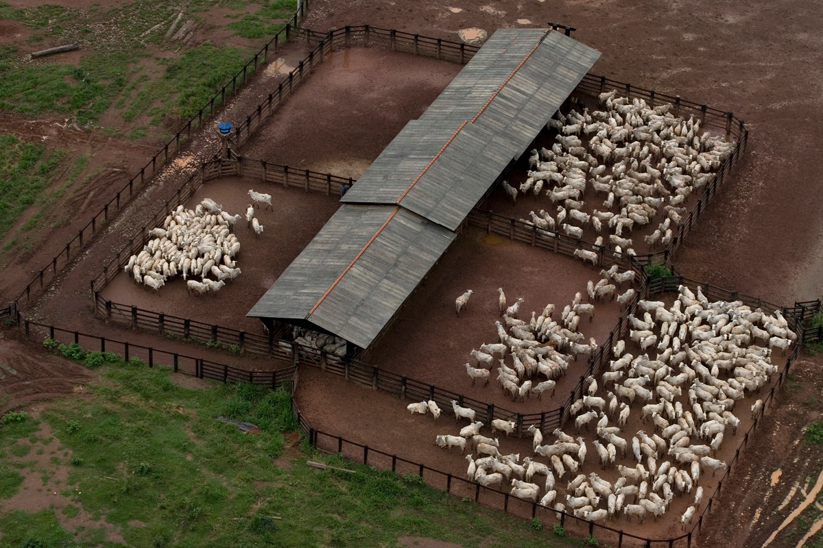Cattle Ranching in Brazil. © Marizilda Cruppe / EVE / Greenpeace