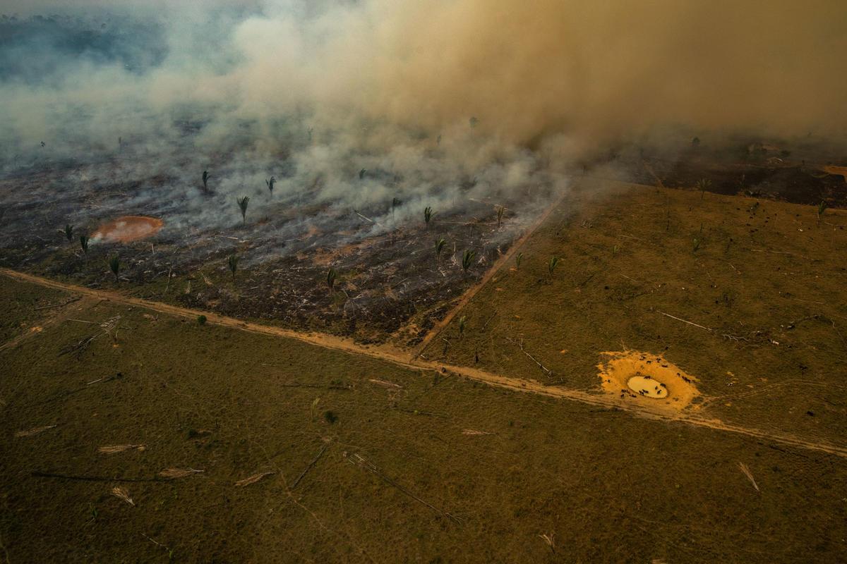 Porto Velho, Rondonia, Brazílie: Letecký pohled na spálené oblasti v amazonském deštném pralese. © Victor Moriyama / Greenpeace