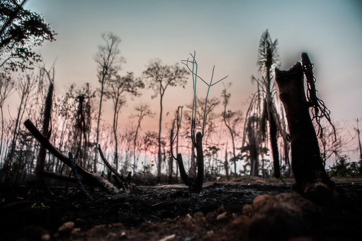 Remains of Forest Fires in Acre. © David Tesinsky / Greenpeace