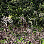 Forest Conservation Units in the Brazilian Amazon. © Daniel Beltrá