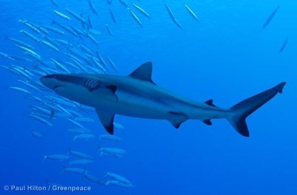 Hajerne bør være mere bange for dig, end du er for dem.
