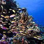 5 utrolige grunde til at beskytte vores oceaner