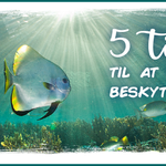5 tips til at beskytte havet