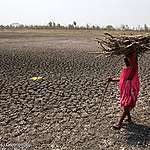 FN-rapport gør det klart – klimakrisen kan ikke løses uden at skære ned på kødet