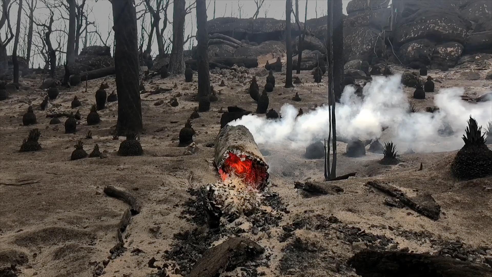 Klimakrisen har sat Australien i brand