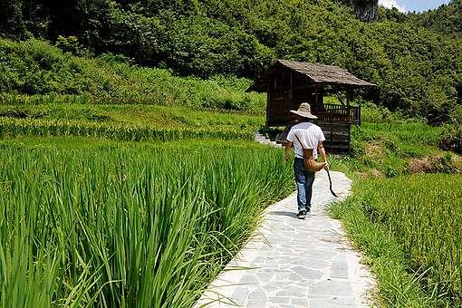 Sustainable Farmer in Guizhou, China. © Liya Ma / Greenpeace