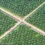 NGO statement on deforestation