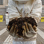 Leak: European governments pave way for bee-killing pesticides
