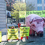 EU Parliament must choose family farms over factory farms, Greenpeace