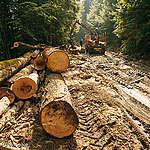 Illegal Logging in Romania