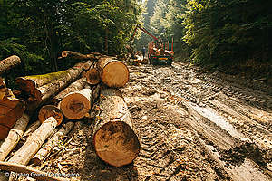 Illegal Logging in Romania