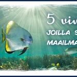 Viisi vinkkiä, joilla suojelet maailman meriä