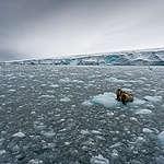 Suomen kaudella Arktinen neuvosto ei saanut edistettyä Pohjoisen jäämeren suojelua