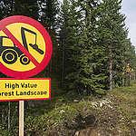 Metsien suojelu Suomen keino pelastaa sekä ilmasto että luonnon monimuotoisuus