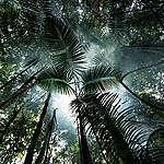 4 vinkkiä, joilla suojelet Amazonia